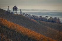 Weinberge von Meersburg mit Winzerturm - Bodensee von Christine Horn