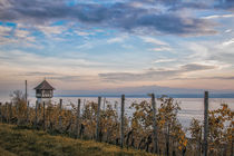 Weinberg in Meersburg mit Winzerturm und Blick auf den Obersee - Bodensee von Christine Horn