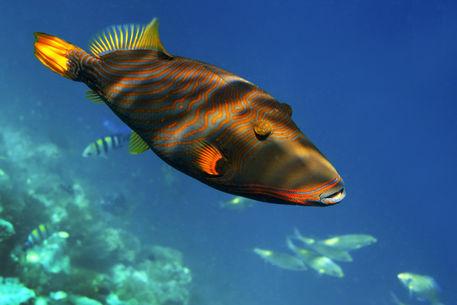 Maldives-img-0702