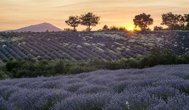 Provence-715-2201-ts44