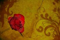 Die Rose by Claudia Evans