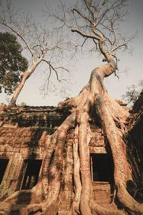 Ta Phrom Tempel im Dschungel, Angkor Wat Tempel, Kambodscha, by travelstock44