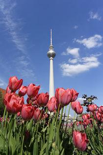 Tulpen Frühling, Alexanderplatz, Fernsehturm, Berlin  von travelstock44