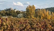 Weinreben,  Ansouis, Luberon, Provence, von travelstock44