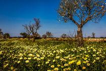 Frühling auf Mallorca von gfischer