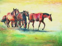 Pferde auf den Elbwiesen von Renée König