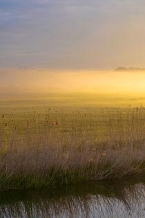 So schön kann Nebel sein von Bernhard Kaiser