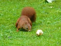 Eichhörnchen von maja-310