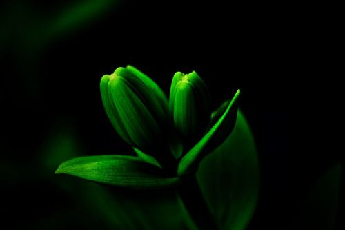 Soft-nature-001f