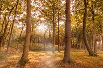 Herbstwald im Sonnenschein von Christoph  Ebeling