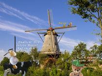 Don Quixote und der letzte Riese von Anni Freiburgbärin von Huflattich