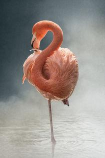 Flamingo by Michaela Pucher