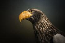Adler by Michaela Pucher