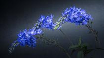 Blaues Blümchen by Michaela Pucher