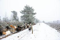Begegnung im Winter by gscheffbuch