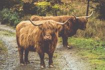 Cow von Jürgen Creutzburg