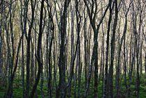 Glendalough... 15 von loewenherz-artwork