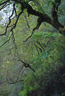 Glendalough... 12 von loewenherz-artwork