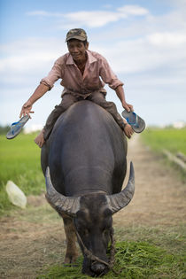 man on a buffel by Ard Bodewes