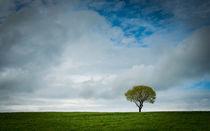 Einsamer Baum von Katrin Raabe