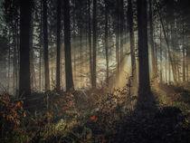 Wald I von Christine Horn