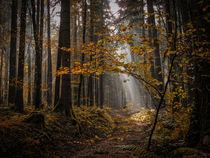 Wald III - Der Weg zum Licht by Christine Horn