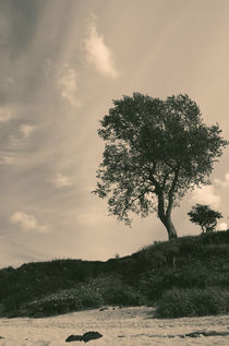 Tree by cinema4design