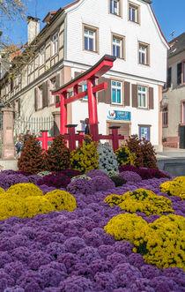 Blüten über Blüten by Stephan Gehrlein