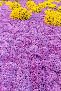 Blüten Blüten Blüten by Stephan Gehrlein