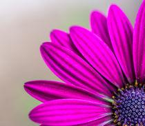 Blütenecke von Stephan Gehrlein