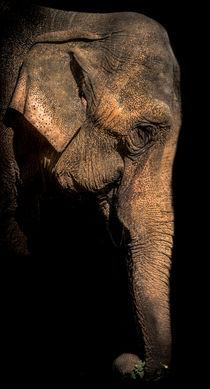 Elefant von Stephan Gehrlein