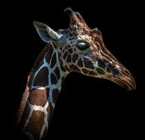 Giraffe by Stephan Gehrlein