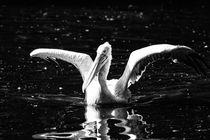 Pelikan von Manfred Übelbacher