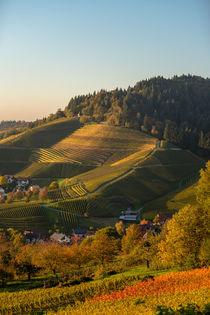 Weinberge im Herbst von Stephan Gehrlein