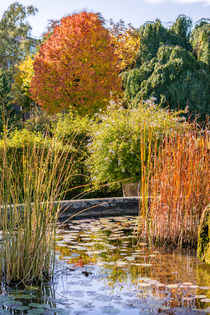 Bunter Herbst by Stephan Gehrlein