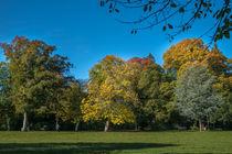 Wald-Blick by Stephan Gehrlein