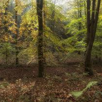 Autumn Highlights von David Tinsley