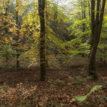 Autumn Highlights by David Tinsley
