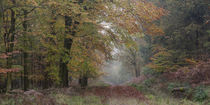 Autumn Walk by David Tinsley