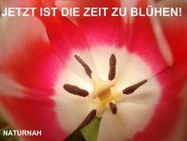 Jetzt ist die Zeit zu Blühen! by Andrea Köhler