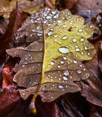 November tears  by Enache Armand Iustinian