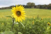 Flowers 939617 von Mario Fichtner