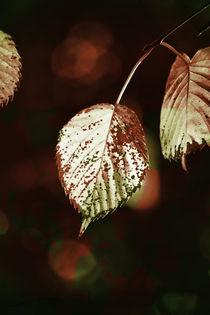 Taschentuchbaum von Bastian  Kienitz