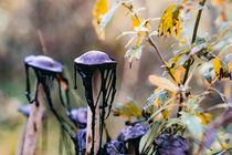 Abstract Autumn von Alexander Kollmer