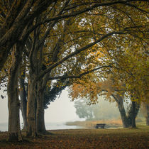 Herbstmorgen am Bodensee by Christine Horn