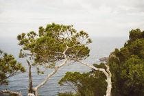 Wilder Baum by Katja Goerne