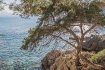 Baum  by Katja Goerne