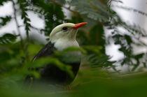 Vogel von galerie artgero