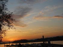 Goldener Oktober am Rheinufer von rosenlady