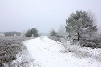 Durch die Winterheide by gscheffbuch